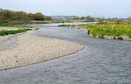 多摩川 に さらす 手作り さらさら に 何 そこ の 児 の ここだ かなしき 万葉集 多摩川にさらす手作りさらさらに